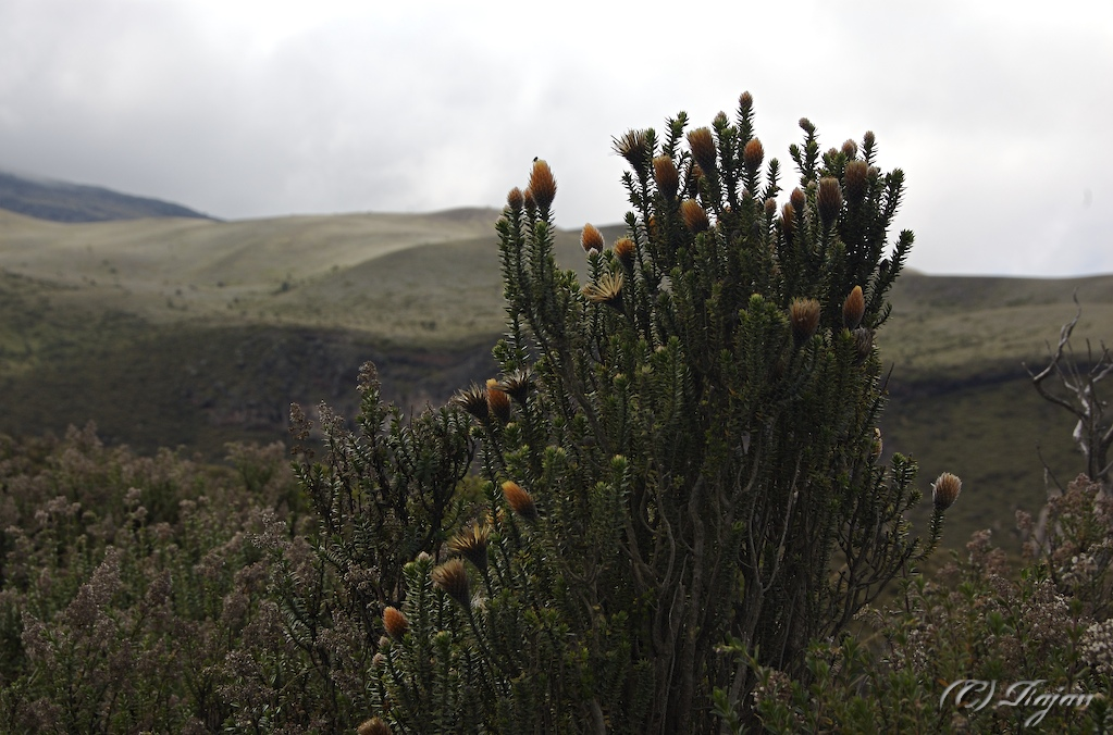 Flowers in the upper altitudes